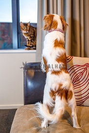 dog standing on arm of sofa looking at cat