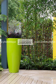 Pot design vert. Phyllostachys sp. (bambou). Paysagiste : Roger Smith. HCFS, Angleterre