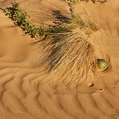 Shifting sands, South Eastern Australia.