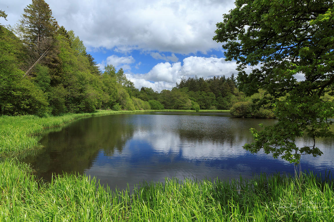 Falcondale lake, near Lampeter