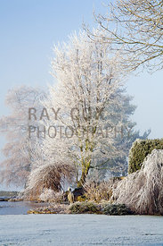 Frosted Nothofagus antarctica (Antarctic beech), willow and cornus by frozen pond