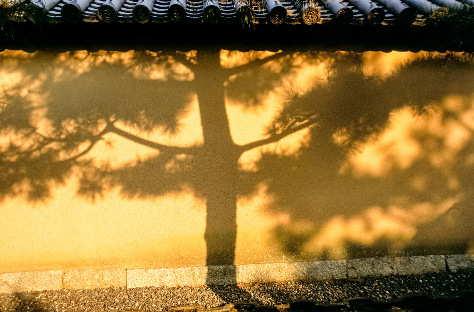 The shadow of a tree at the Daisen-In temple in Kyoto