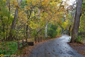 Fall Colors in Bidwell Park, #9
