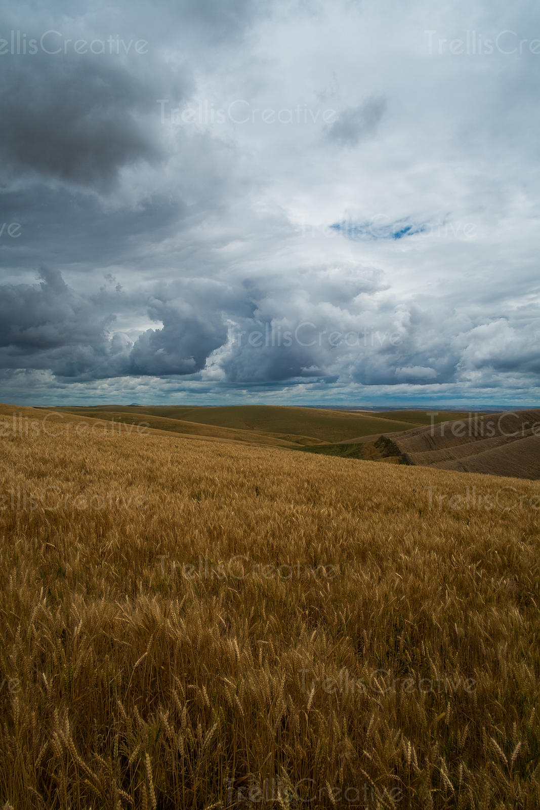 Approaching storm in Idaho wheat fields