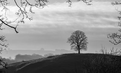 Lone tree, winter, Hassop