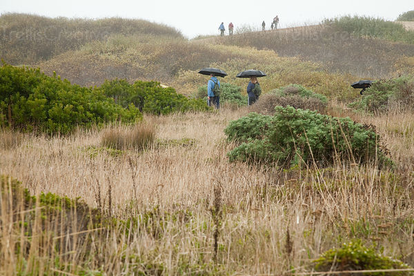 People with umbrellas walking in bushes at Ano Nuevo State Reserve, California