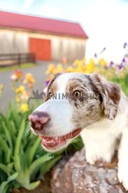 farm dog sitting on rock surrounded by flowers