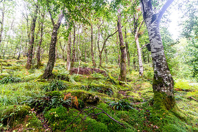 Magic Woodland (Horizontal)- Betws-y-Coed, Wales