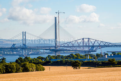 The three Forth Bridges with a field of Wheat in the foreground