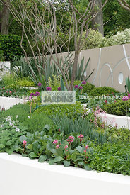 Jardin contemporain, Jardin design. Massif surélevé : Allium hollandicum 'Purple Sensation'. Designer : Robert Myers. Chelsea...