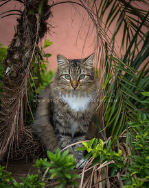 inquisitive adult cat sitting surrounded by palm trees