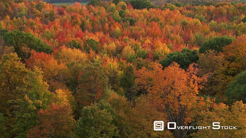 Aerial view of autumn's beauty in New England