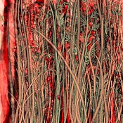 Qualia_s_Grass_Antique_Red