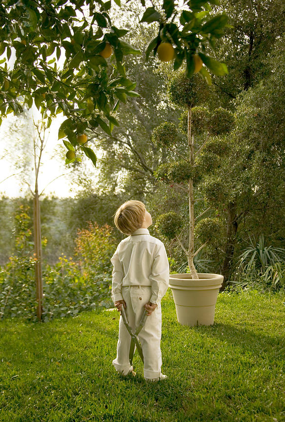 Boy looking up at plants