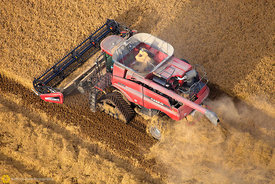 Aerial View of Rice Harvest #39