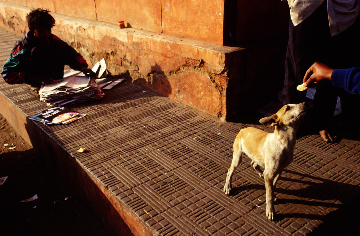 India - Delhi - Street workers and their dogs