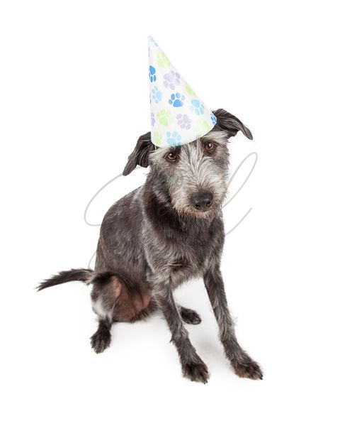 Dog Wearing Pawprint Party Hat