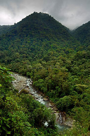 Cloud forest and river at Rio Grande de Orosi, Tapanti NP, Costa Rica