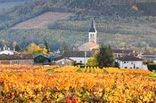 Vineyards of Julienas, Beaujolais region, Rhone Alpes, France