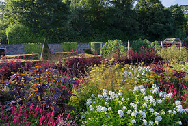 Mixed perennials and geometric topiary