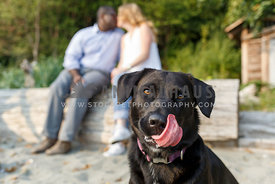 black lab licking face with kissing couple