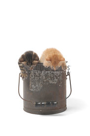 Two kittens in bucket looking at floor on white background