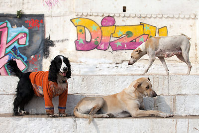 Stray dogs play on the ghats in Varanasi, India.