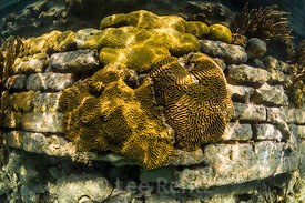 Corals and Sponges aroung the Moat Wall of Fort Jefferson
