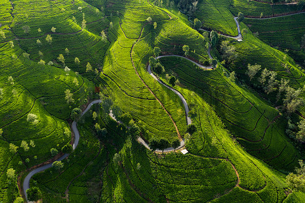 Aerial View of a Road Winding through the Edinburgh Tea Estate