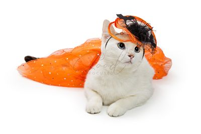 Cat Wearing Orange Halloween Outfit