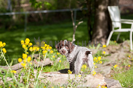 Little puppy standing in a flower bed in the sunshine