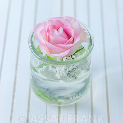 Pink rose in a glass