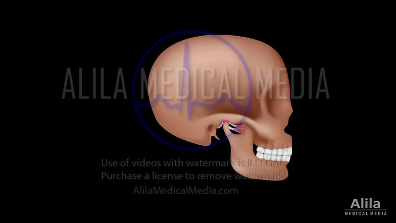 TMJ anatomy and disorder NARRATED video