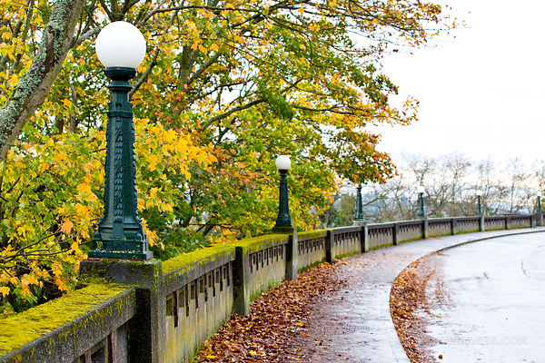 SEATTLE MARSHALL PARK SEATTLE AUTUMN FALL COLORS