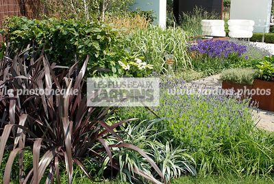 Phormium tenax 'Black Adder', New Zealand flax dans un massif fleuri. Paysagiste : Paul Martin, Hampton Court, Angleterre