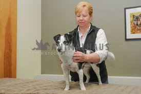 Massage Therapist working on mixed breed