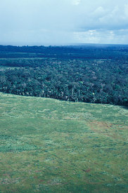 Forest cleared for cattle grazing, Rondia, Brazil.