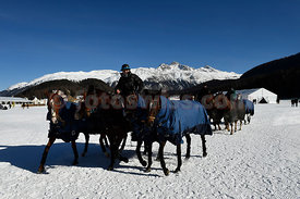 Snow Polo World Cup St. Moritz 2017