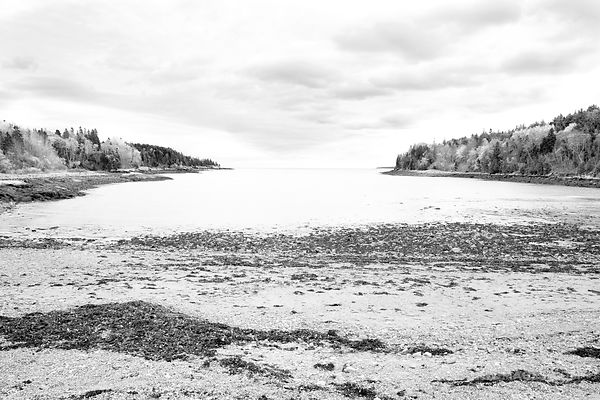 OTTER COVE ACADIA NATIONAL PARK MAINE BLACK AND WHITE