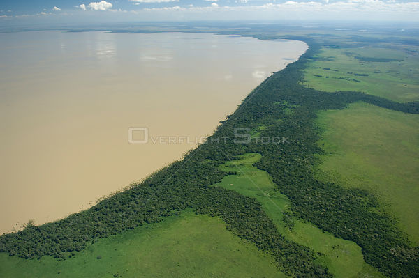 "Aerial view of Rogaguado Lake with its shores covered by ""buriti"" palm trees (Mauritia flexuosa), in the region of the great ..."