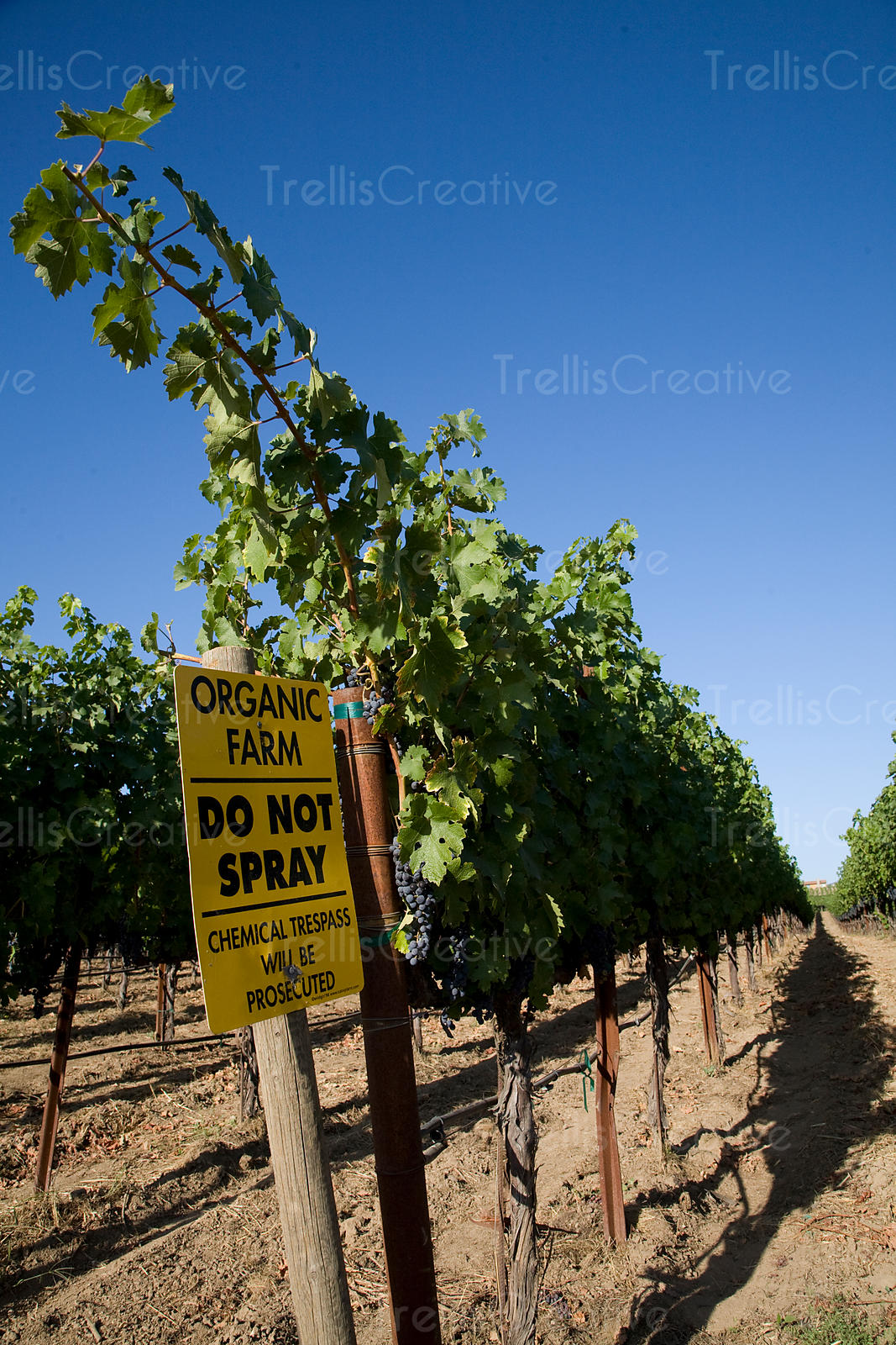Do not spray sign in organic vineyard