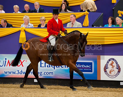 Middleweight Show Hunter Class, Horse of the Year Show 2010