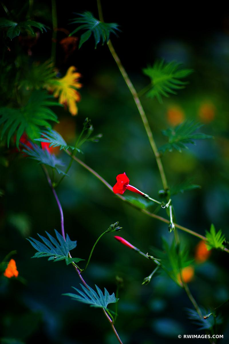 SUMMER EVENING GARDEN CAPE COD MASACHUSETTS COLOR VERTICAL
