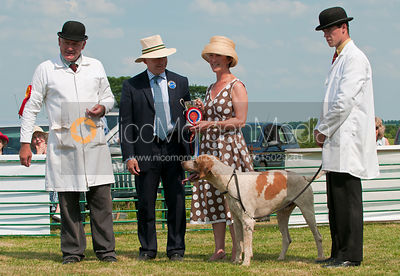 Neil Coleman, James Mossman, Jane Knight, Cottesmore Whopper and Joe Tesseyman, The Blaston Hound Show 2010
