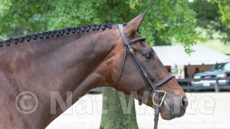 Horse_at_Upperville--DSC_9303-June_04_2015