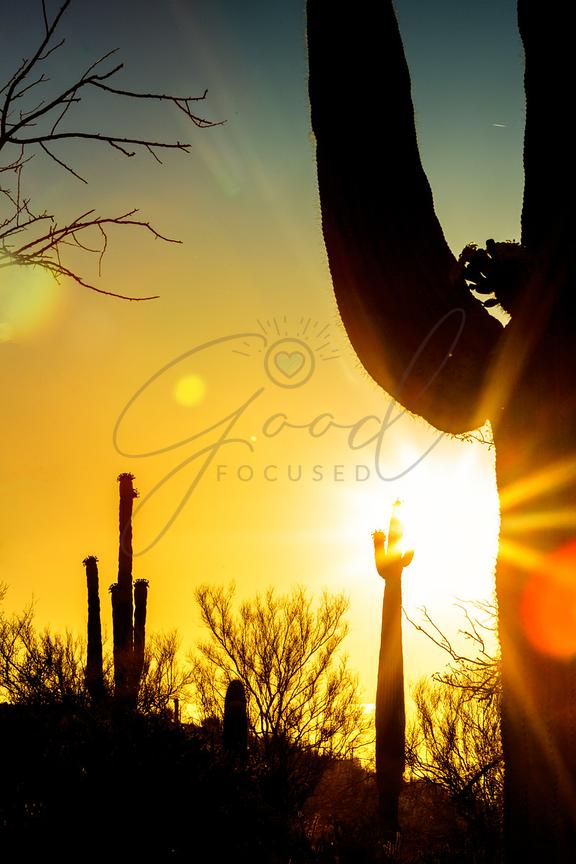 Saguaro Cactus Silhouette at Colorful Sunrise