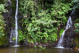 Waterfalls and tropical cloud forest vegetation near Coroico, North Yungas province, Bolivia