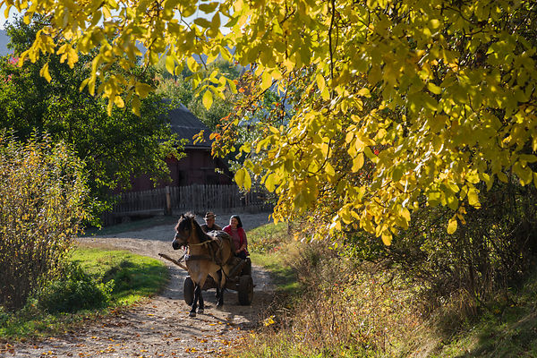 Gheorghiu and His Daughter on a Horse-drawn Wagon in Rural Bucovina