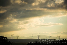 Wind turbines in farm fields