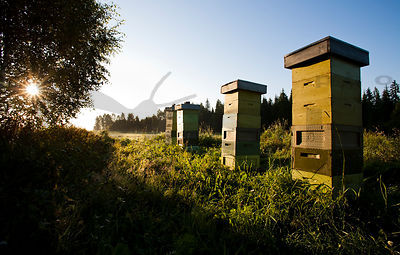 Apiary in the morning sun
